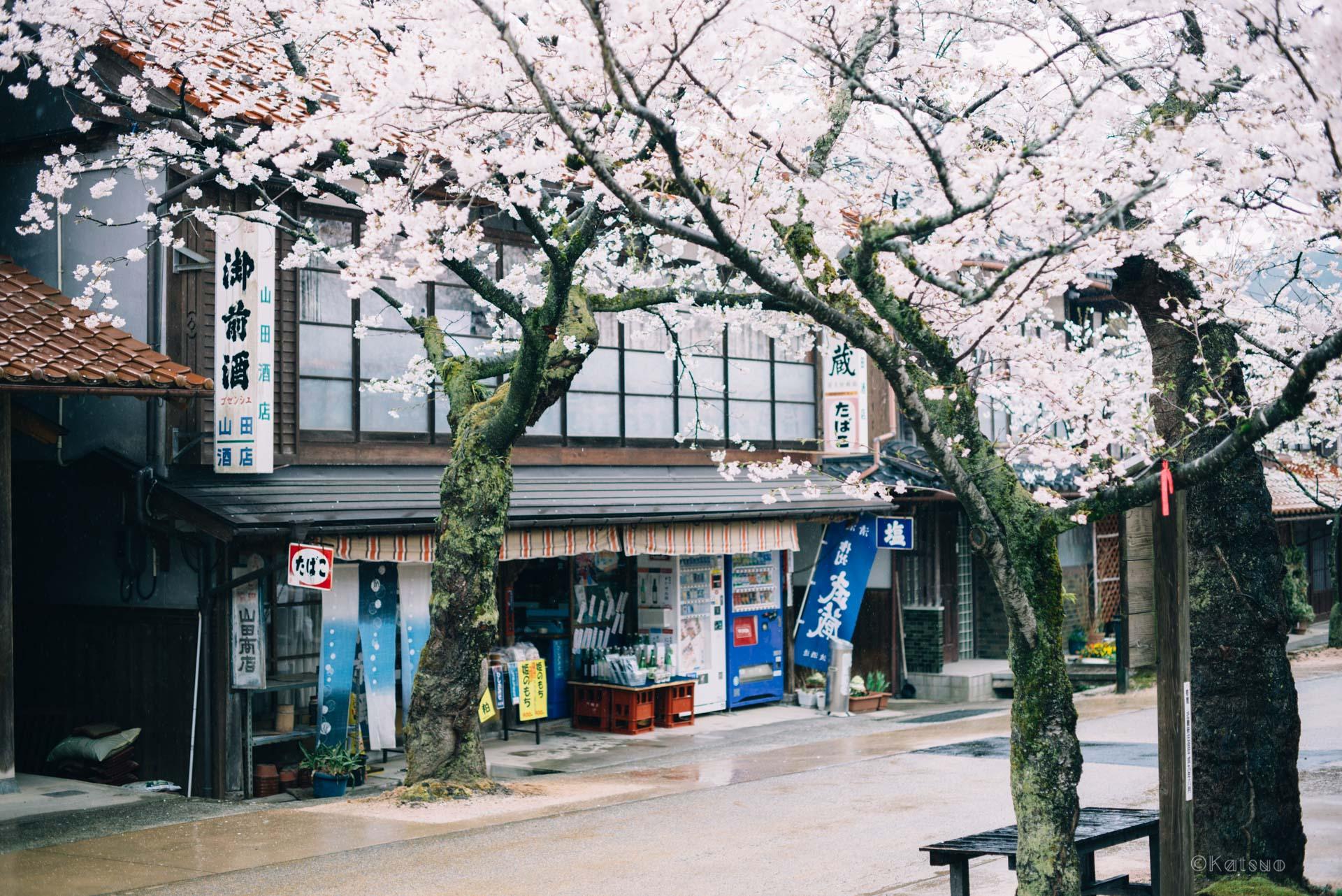 日本で最も美しい村。【日本一周12日目2018.04.07(No.09岡山県新庄村)】