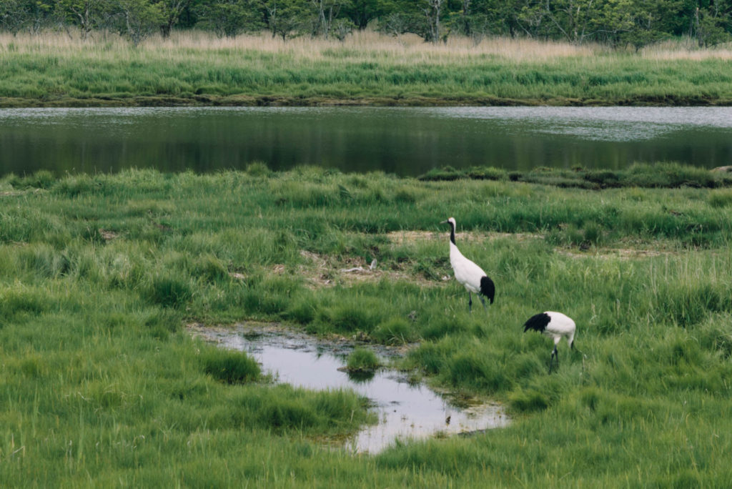 釧路の湿原を眺める。【日本一周97日目2018.07.01北海道編】