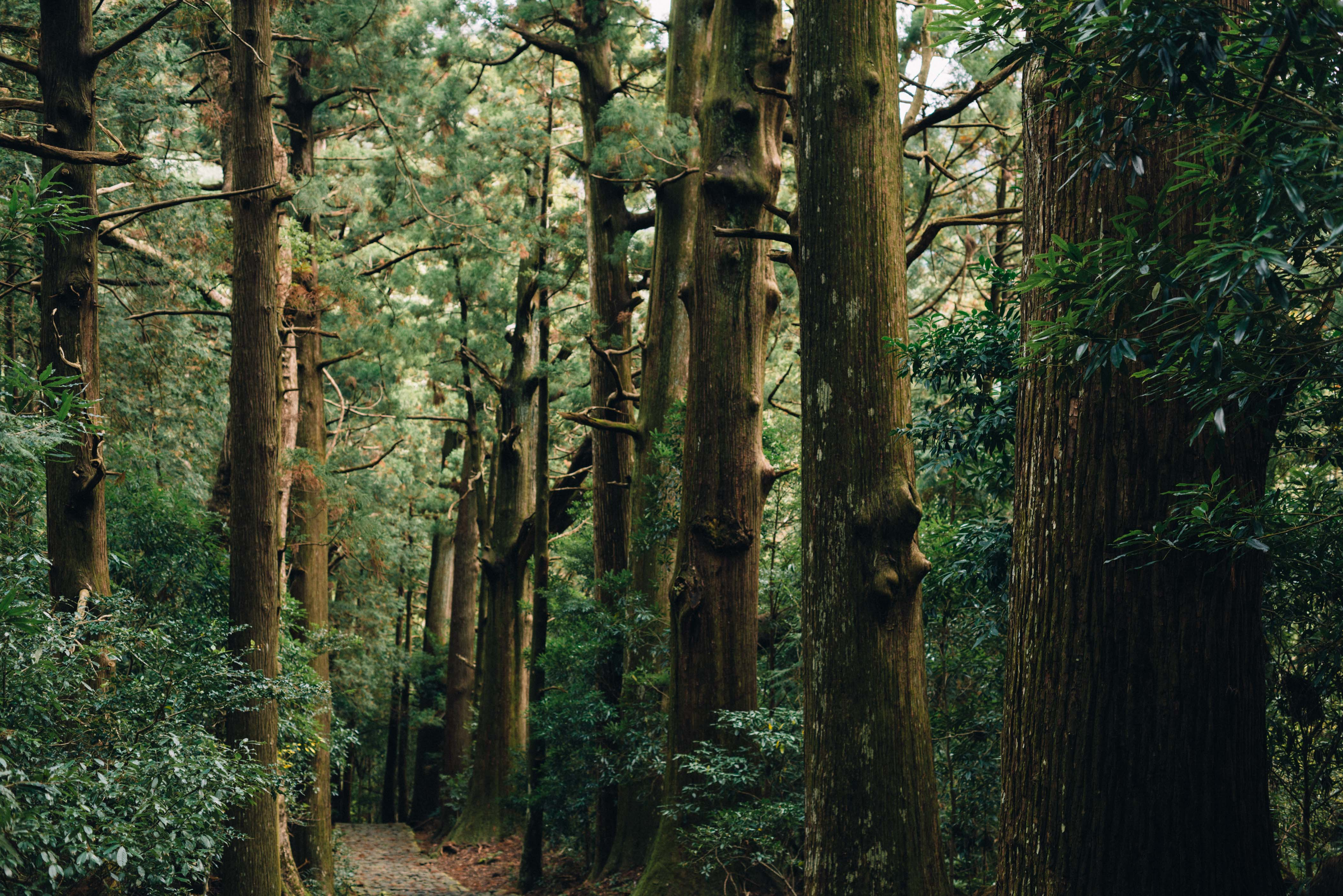 世界遺産・熊野古道にくじらの博物館、和歌山県を全身で体感しよう。【日本一周262日目12.12】