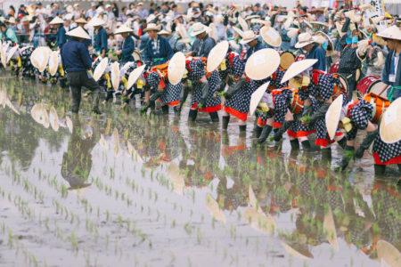 北広島町、壬生の花田植え。【世界無形文化遺産】