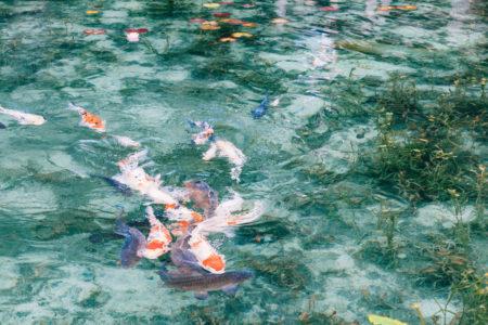 モネの池にジブリの株杉、岐阜県関市へ。